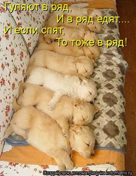 Котоматрица: Гуляют в ряд, И в ряд едят.... И если спят, То тоже в ряд!