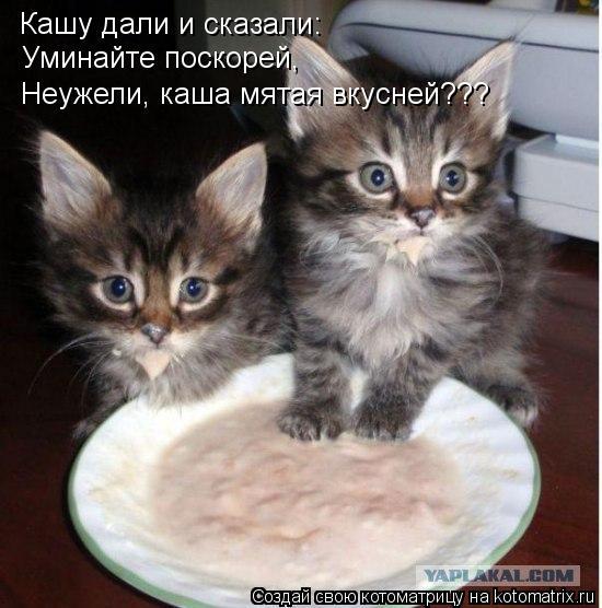 Котоматрица - Кашу дали и сказали: Уминайте поскорей, Неужели, каша мятая вкусней???