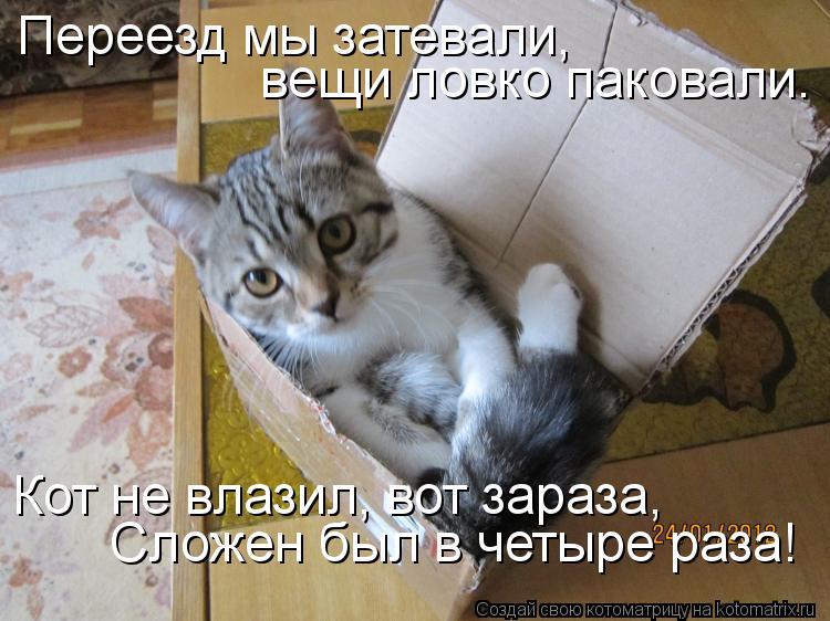 Котоматрица: Переезд мы затевали, вещи ловко паковали. Кот не влазил, вот зараза, Сложен был в четыре раза!