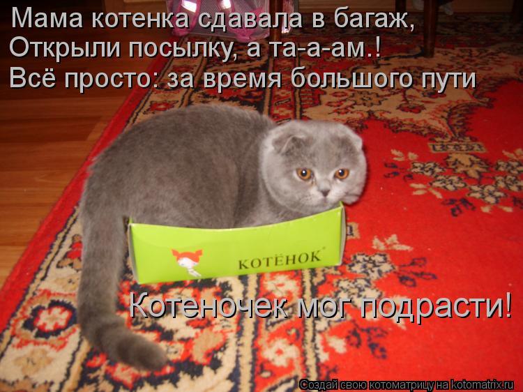 Котоматрица: Мама котенка сдавала в багаж, Открыли посылку, а та-а-ам…! Всё просто: за время большого пути Котеночек мог подрасти!
