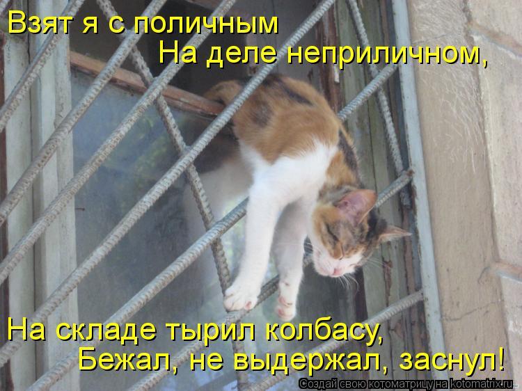 Котоматрица: Взят я с поличным На деле неприличном, На складе тырил колбасу, Бежал, не выдержал, заснул!