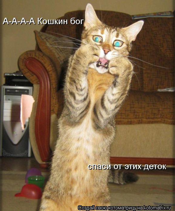 Котоматрица: А-А-А-А Кошкин бог спаси от этих деток
