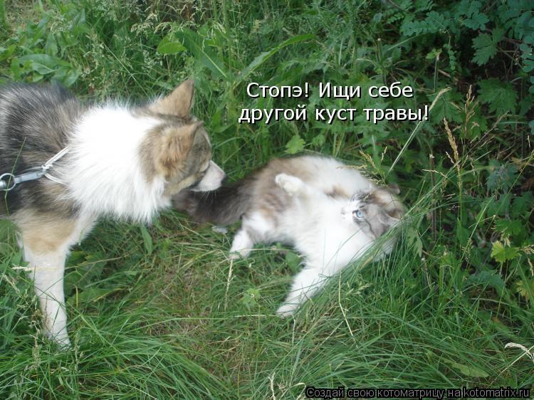 Котоматрица: Стопэ! Ищи себе другой куст травы!