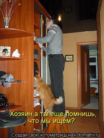 Котоматрица - Хозяин,а ты еще помнишь, что мы ищем?