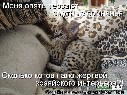 Котоматрица: Меня опять терзают смутные сомненья, Сколько котов пало жертвой хозяйского интерьера?!