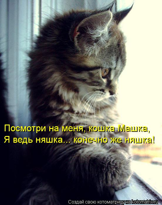 Котоматрица: Посмотри на меня, кошка Машка, Я ведь няшка... конечно же няшка!