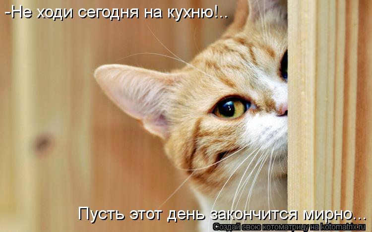 Котоматрица - -Не ходи сегодня на кухню!.. Пусть этот день закончится мирно...