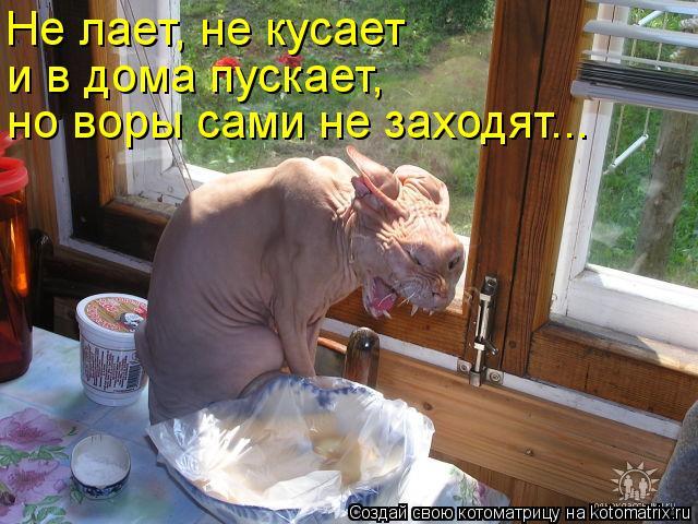 Котоматрица: Не лает, не кусает  и в дома пускает, но воры сами не заходят...