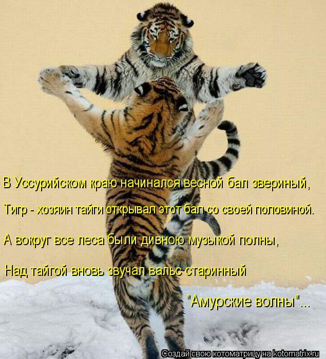 """Котоматрица: В Уссурийском краю начинался весной бал звериный, Тигр - хозяин тайги открывал этот бал со своей половиной. """"Амурские волны""""... А вокруг все л"""