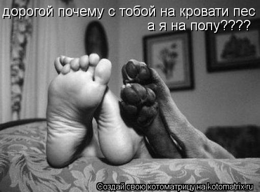 Котоматрица: дорогой почему с тобой на кровати пес  а я на полу????