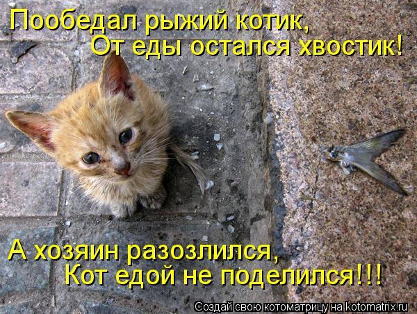 Котоматрица: Пообедал рыжий котик, От еды остался хвостик! А хозяин разозлился, Кот едой не поделился!!!