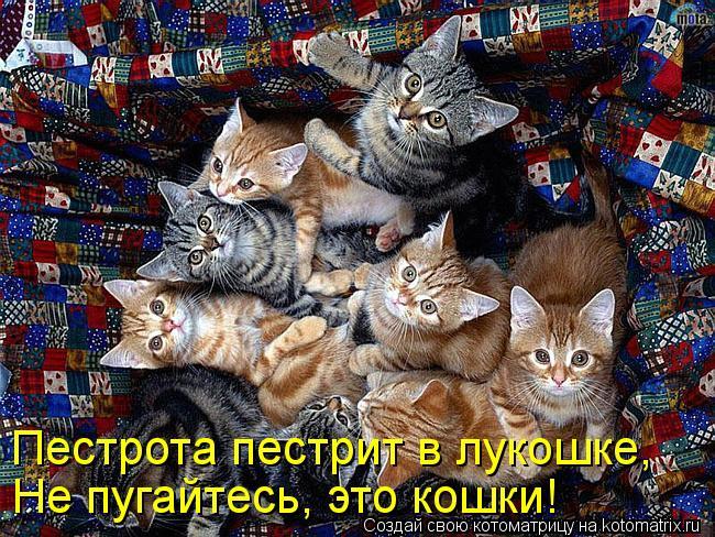 Котоматрица: Пестрота пестрит в лукошке, Не пугайтесь, это кошки!