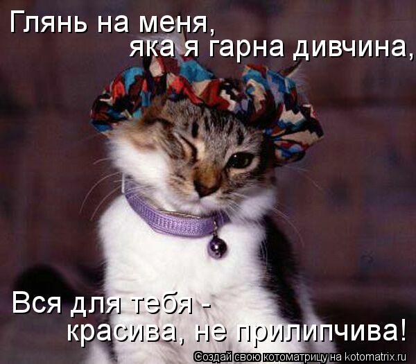 Котоматрица: Глянь на меня, яка я гарна дивчина, Вся для тебя - красива, не прилипчива!