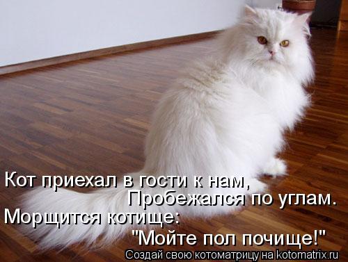 """Котоматрица: Кот приехал в гости к нам, Пробежался по углам. Морщится котище: """"Мойте пол почище!"""""""