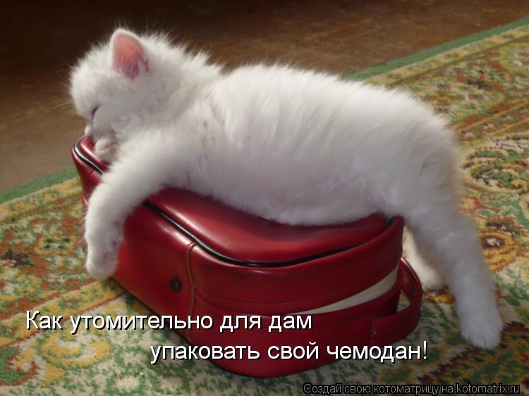 Котоматрица: Как утомительно для дам упаковать свой чемодан!