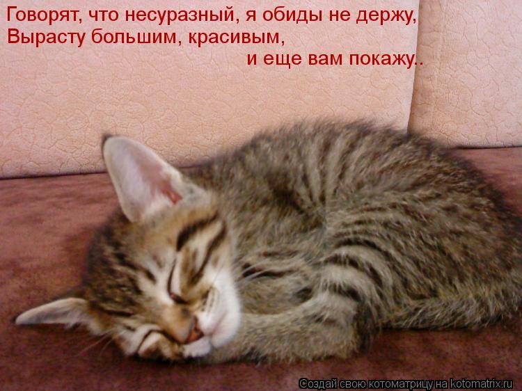 Открытка котенок обиделся