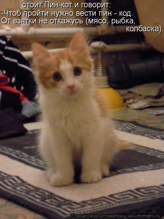 Котоматрица: стоит Пин-кот и говорит: -Чтоб пройти нужно вести пин - код. От взятки не откажусь (мясо, рыбка, колбаска).