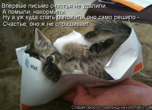 Котоматрица: Ну а уж куда спать положить, оно само решило - Впервые письмо счастья не удалили, А помыли, накормили,  Счастье, оно ж не спрашивает...