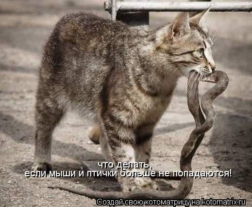 Котоматрица: если мыши и птички больше не попадаются! что делать,