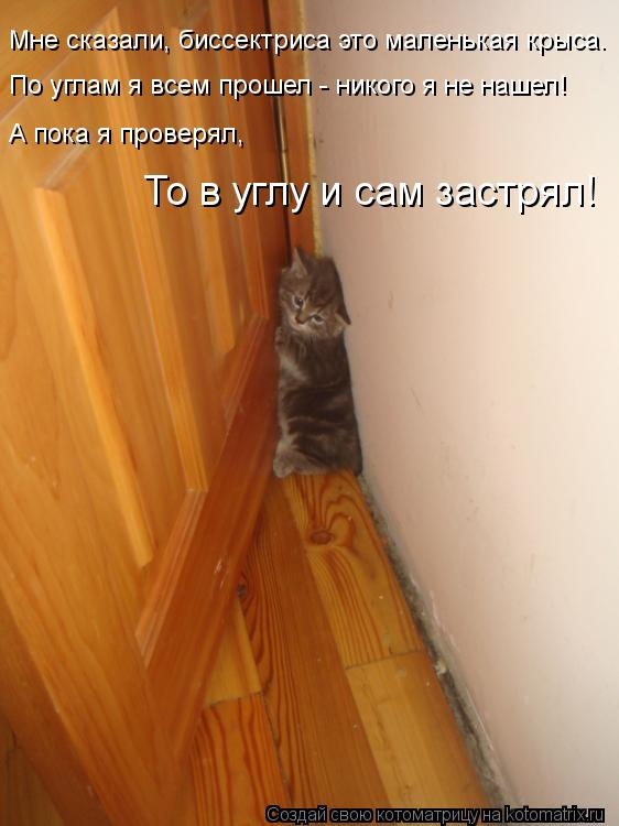 Котоматрица: Мне сказали, биссектриса это маленькая крыса. По углам я всем прошел - никого я не нашел! А пока я проверял, То в углу и сам застрял!