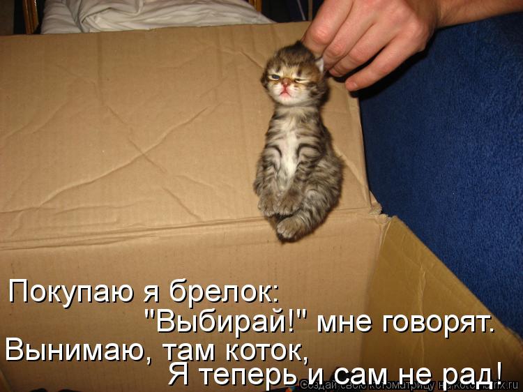 """Котоматрица: Покупаю я брелок: """"Выбирай!"""" мне говорят. Вынимаю, там коток, Я теперь и сам не рад!"""