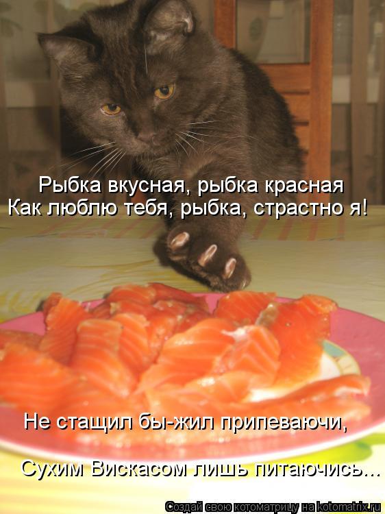 Котоматрица: Рыбка вкусная, рыбка красная Как люблю тебя, рыбка, страстно я! Не стащил бы-жил припеваючи, Сухим Вискасом лишь питаючись...