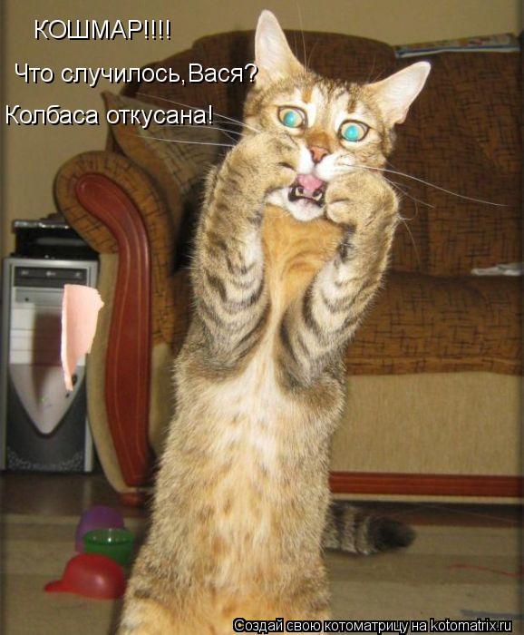 Котоматрица: КОШМАР!!!! Что случилось,Вася? Колбаса откусана!