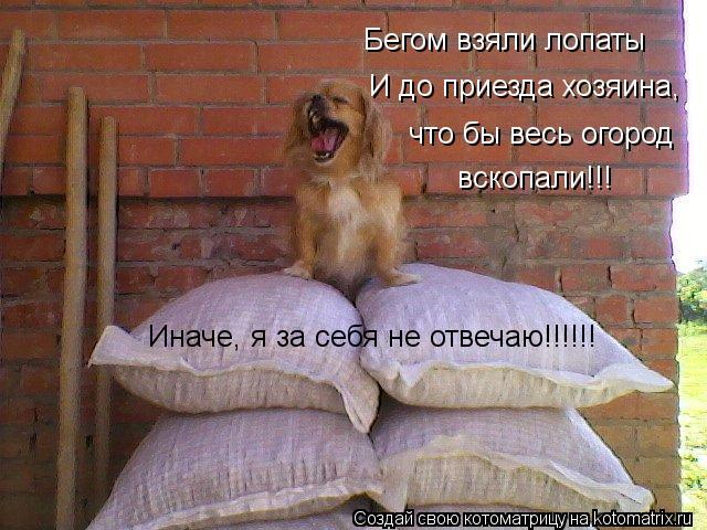 Котоматрица: Бегом взяли лопаты И до приезда хозяина, что бы весь огород вскопали!!! Иначе, я за себя не отвечаю!!!!!!