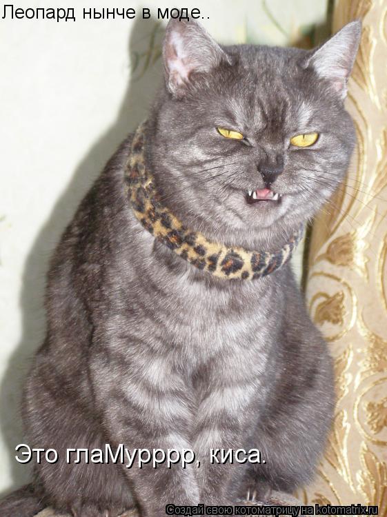 Котоматрица: Леопард нынче в моде.. Это глаМурррр, киса.
