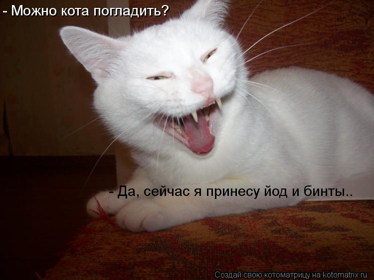 Котоматрица: - Можно кота погладить? - Да, сейчас я принесу йод и бинты..