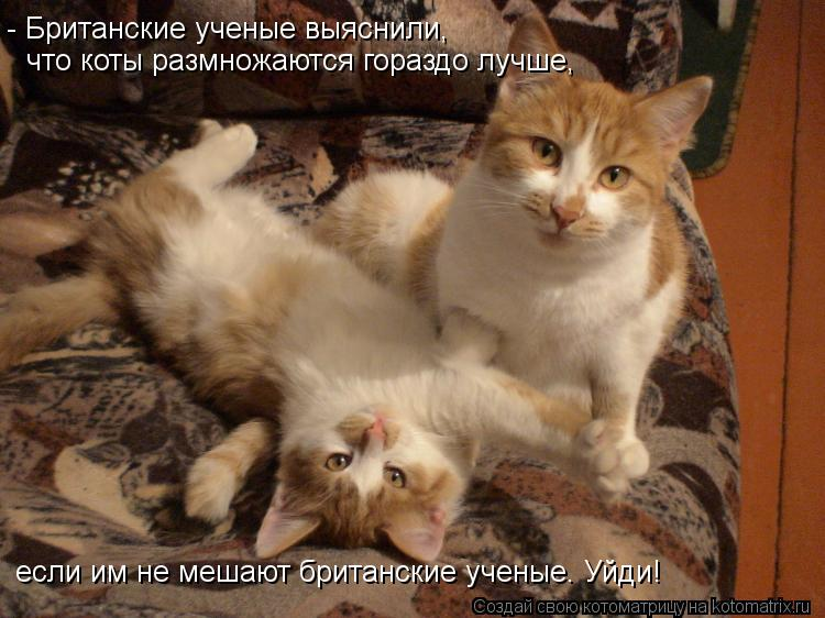 Котоматрица: - Британские ученые выяснили, что коты размножаются гораздо лучше, если им не мешают британские ученые. Уйди!