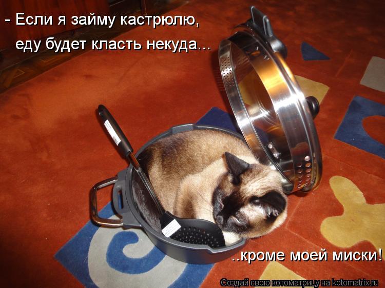Котоматрица: - Если я займу кастрюлю, еду будет класть некуда... ..кроме моей миски!