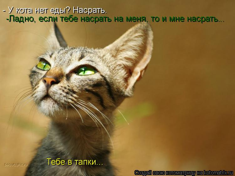 Котоматрица: - У кота нет еды? Насрать. -Ладно, если тебе насрать на меня, то и мне насрать. .. Тебе в тапки...
