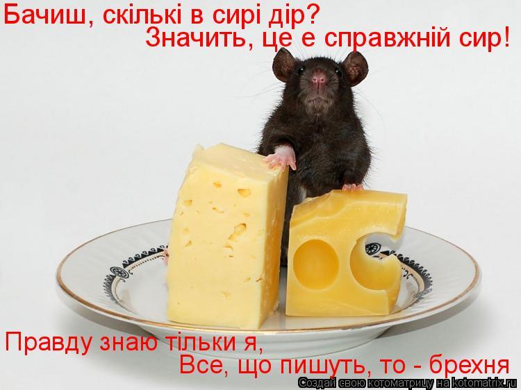 Котоматрица: Бачиш, скiлькi в сирi дiр?  Все, що пишуть, то - брехня Правду знаю тiльки я, Значить, це е справжнiй сир!