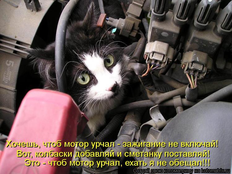 Котоматрица: Это - чтоб мотор урчал, ехать я не обещал!!! Вот, колбаски добавляй и сметанку поставляй! Хочешь, чтоб мотор урчал - зажигание не включай!