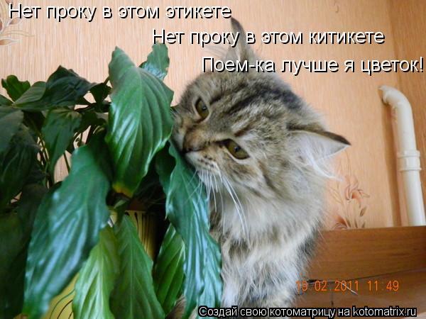 Котоматрица: Нет проку в этом этикете Нет проку в этом китикете Поем-ка лучше я цветок!