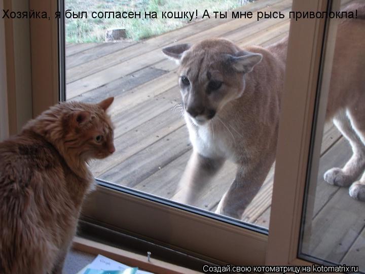 Котоматрица: Хозяйка, я был согласен на кошку! А ты мне рысь приволокла!