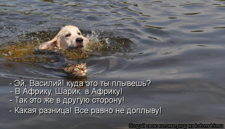 Котоматрица: - Эй, Василий! куда это ты плывешь? - В Африку, Шарик, в Африку! - Так это же в другую сторону! - Какая разница! Все равно не доплыву!
