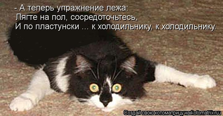 Котоматрица: - А теперь упражнение лежа: Лягте на пол, сосредоточьтесь, И по пластунски ... к холодильнику, к холодильнику.
