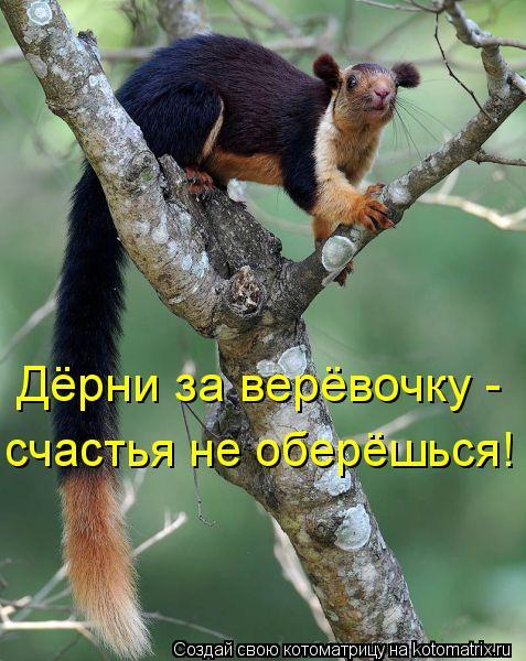 Котоматрица: Дёрни за верёвочку -  счастья не оберёшься!