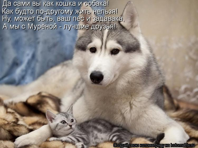 Котоматрица: Да сами вы как кошка и собака! Как будто по-другому жить нельзя! Ну, может быть, ваш пёс и задавака, А мы с Мурёной - лучшие друзья!
