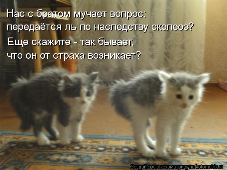 Котоматрица: Нас с братом мучает вопрос: передаётся ль по наследству сколеоз? Еще скажите - так бывает, что он от страха возникает?