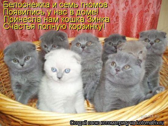 Котоматрица: Белоснежка и семь гномов  Появились у нас в доме! Принесла нам кошка Зинка Счастья полную корзинку!