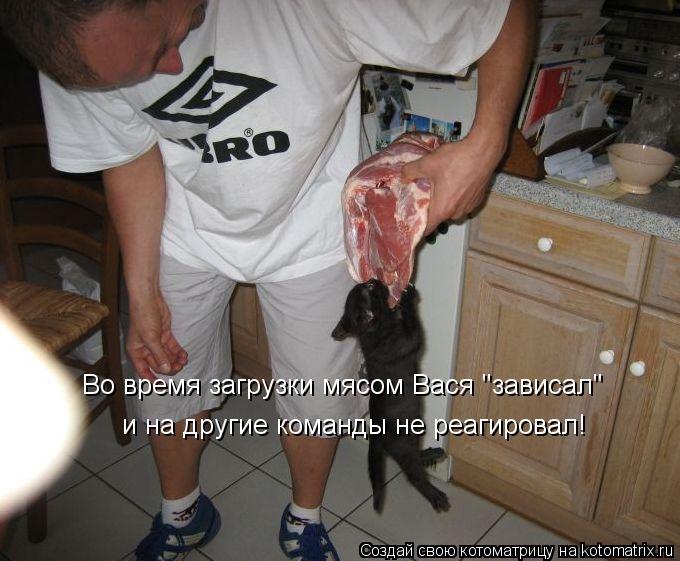 """Котоматрица: Во время загрузки мясом Вася """"зависал""""  и на другие команды не реагировал!"""