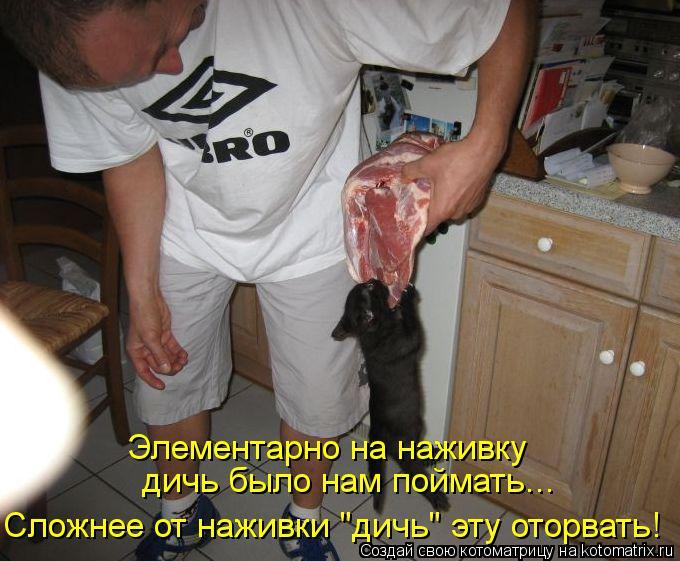 """Котоматрица: Элементарно на наживку  дичь было нам поймать... Сложнее от наживки """"дичь"""" эту оторвать!"""