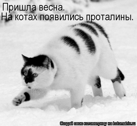 Котоматрица: Пришла весна. На котах появились проталины.