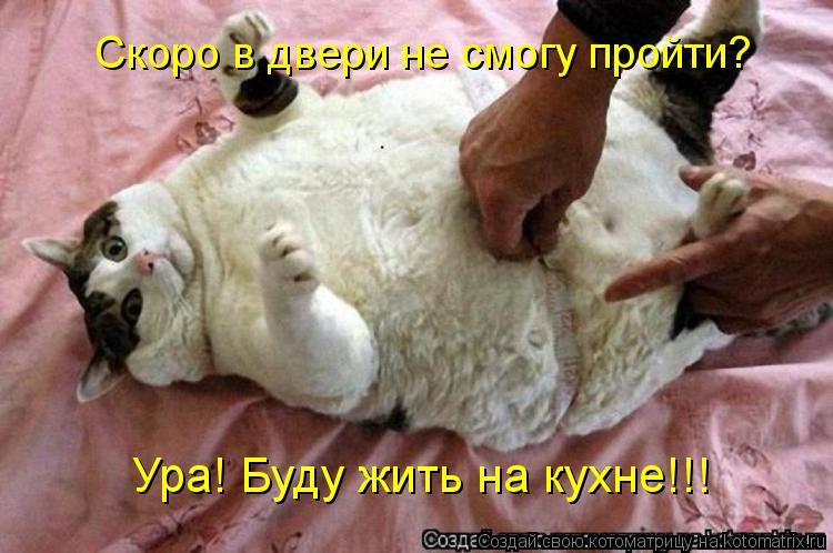 Котоматрица: Ура! Буду жить на кухне!!! Скоро в двери не смогу пройти?