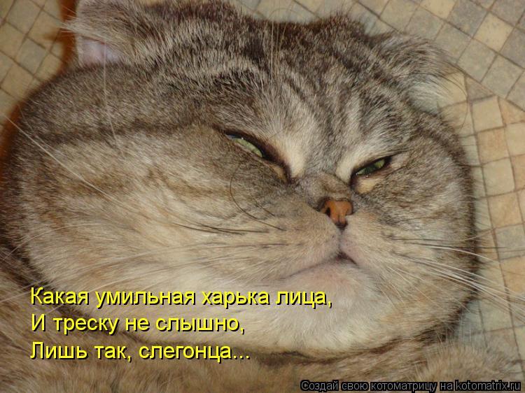 Котоматрица: Какая умильная харька лица, И треску не слышно, Лишь так, слегонца...