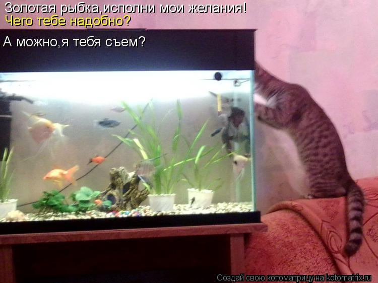Котоматрица: Золотая рыбка,исполни мои желания! Чего тебе надобно? А можно,я тебя съем?