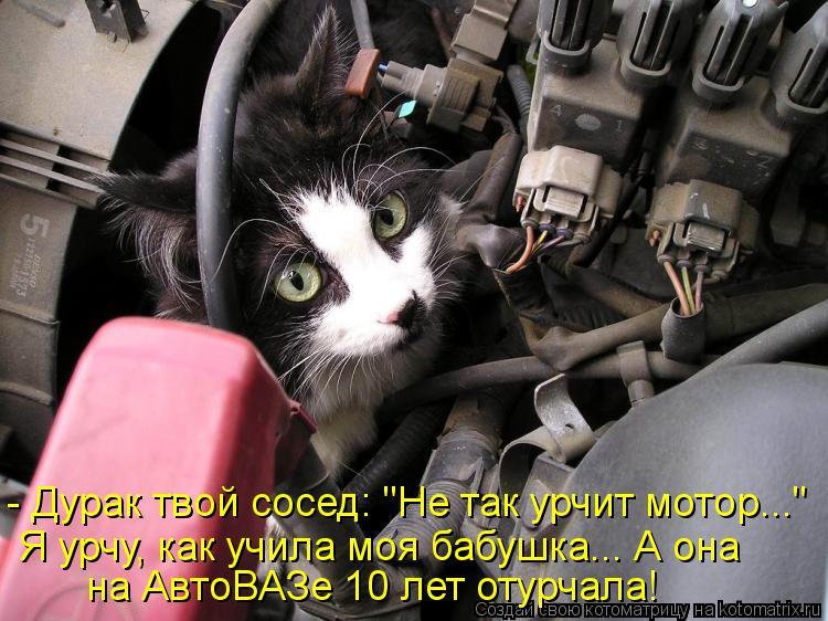 """Котоматрица - - Дурак твой сосед: """"Не так урчит мотор..."""" Я урчу, как учила моя бабу"""